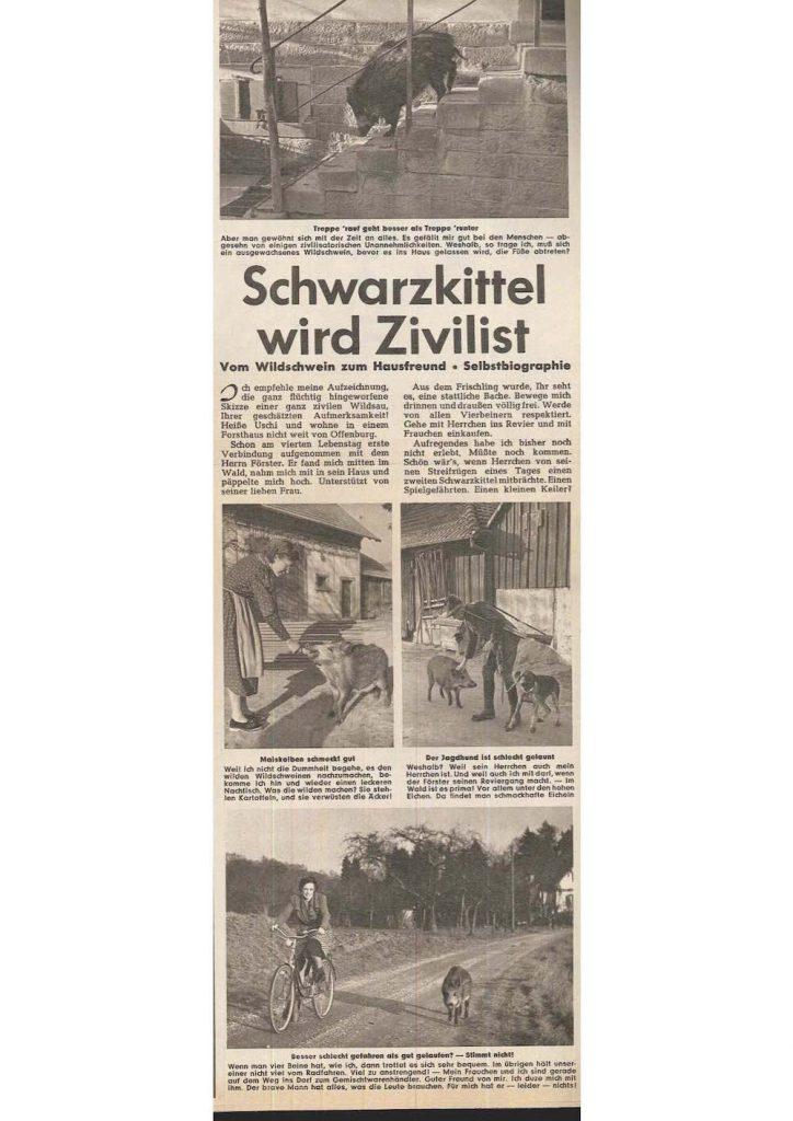 Archivrubrik Pabst Ho rZu Abb 2